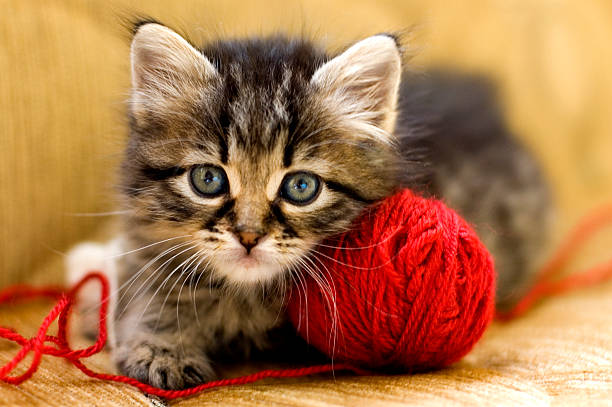 Wool lover picture id91687957?b=1&k=6&m=91687957&s=612x612&w=0&h=udmdx0m9pcroeeooncwwunzhzsaatgrmtitnxldyfdq=