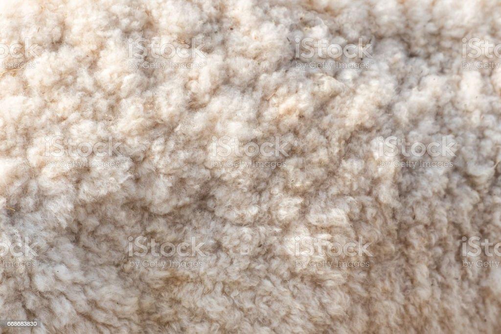 Wool soft sheep surface close up stock photo