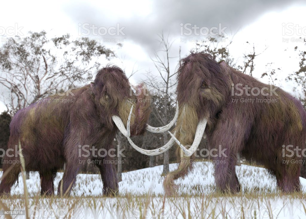 Woolly Mammoth Clones stock photo