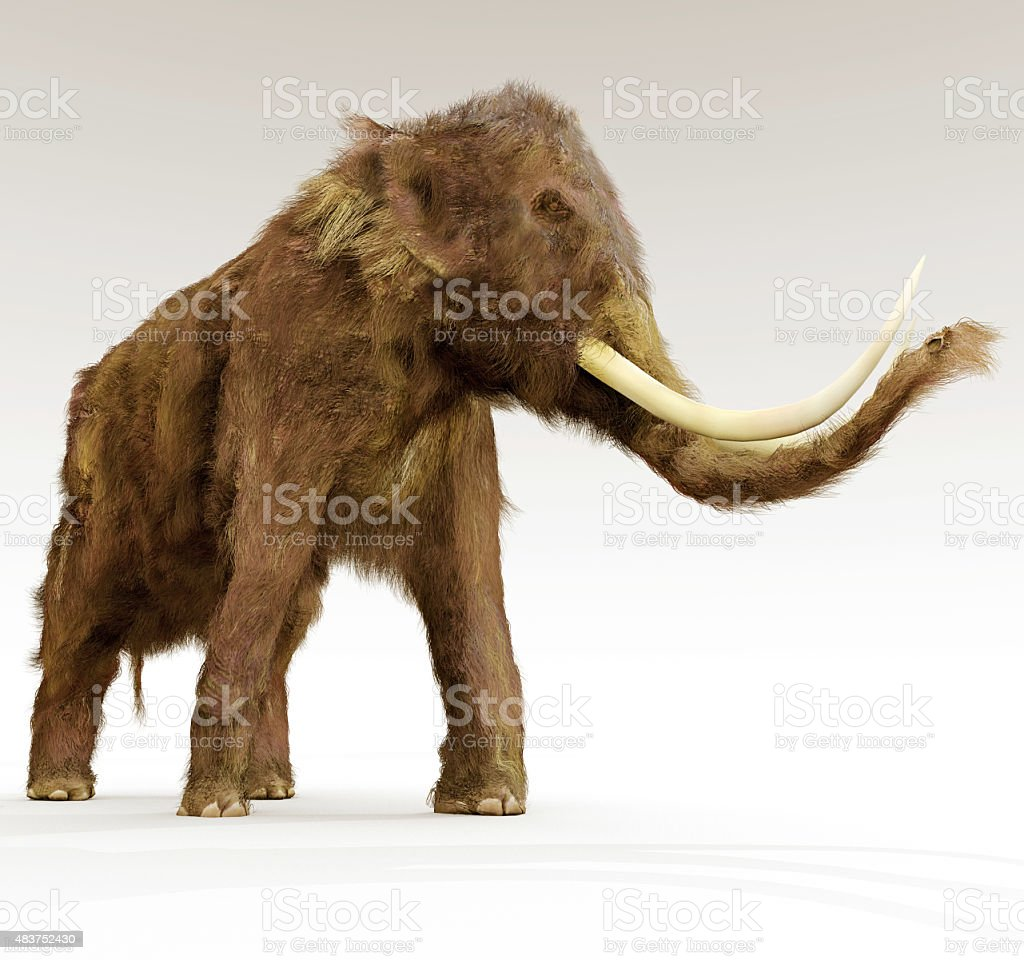 Woolly Mammoth On White Background stock photo
