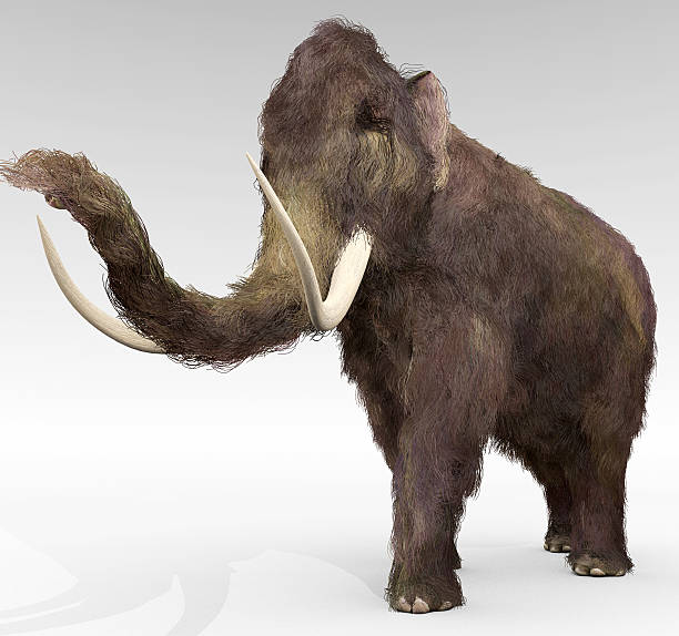 Woolly Mammoth stock photo