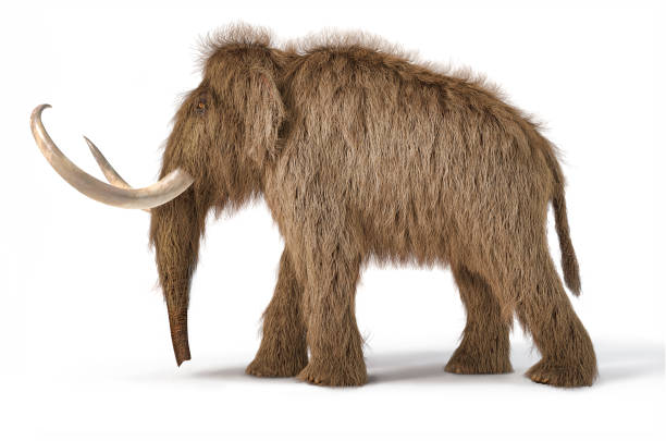 Woolly mammoth realistic 3d illustration viewed from a side. Woolly mammoth realistic 3d illustration viewed from a side. On white background with dropped shadow. tusk stock pictures, royalty-free photos & images