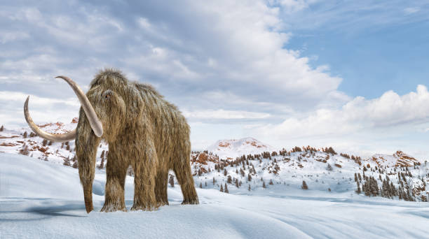 Woolly mammoth set in a winter scene environment. 16/9 Panoramic format. Woolly mammoth set in a winter scene environment. 16/9 Panoramic format. Realistic 3d illustration. tusk stock pictures, royalty-free photos & images