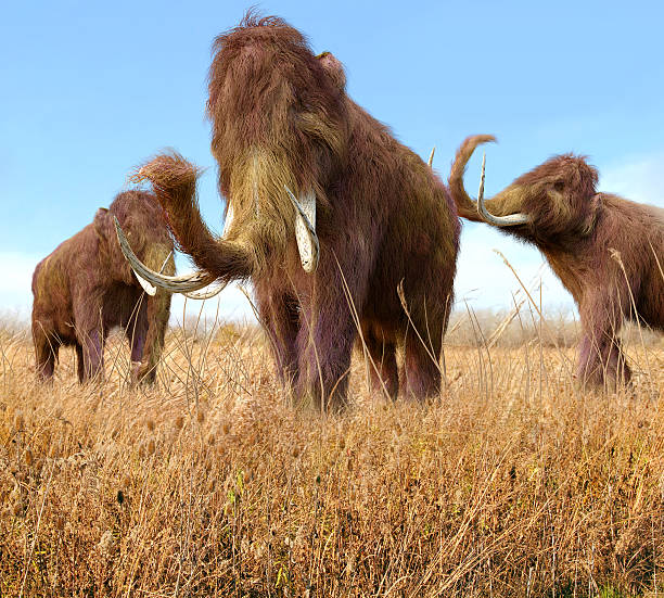Woolly Mammoths Grazing In Grassland stock photo