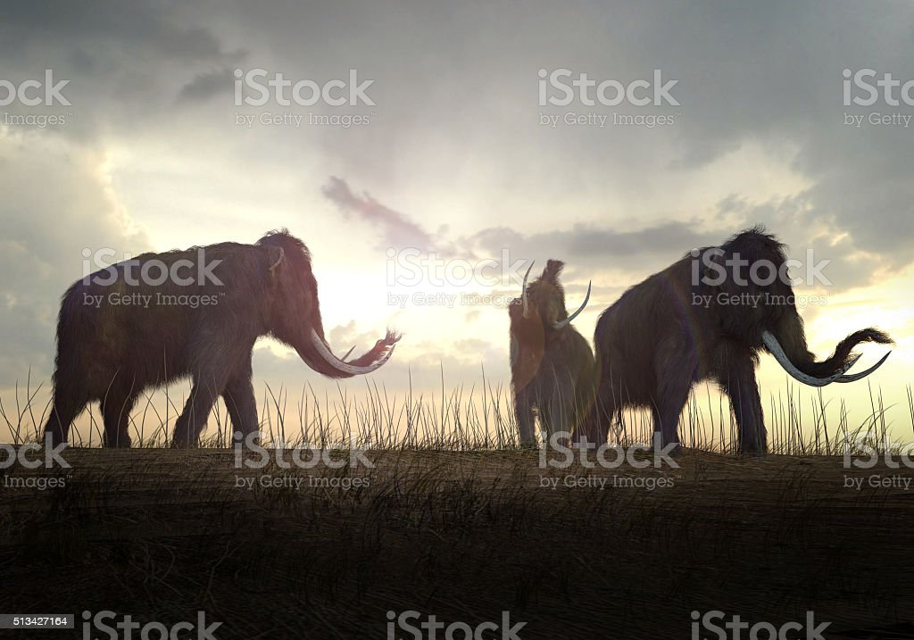 Woolly Mammoths In The Sunset stock photo