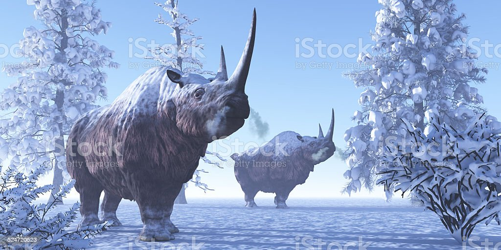 Woolly Rhino stock photo