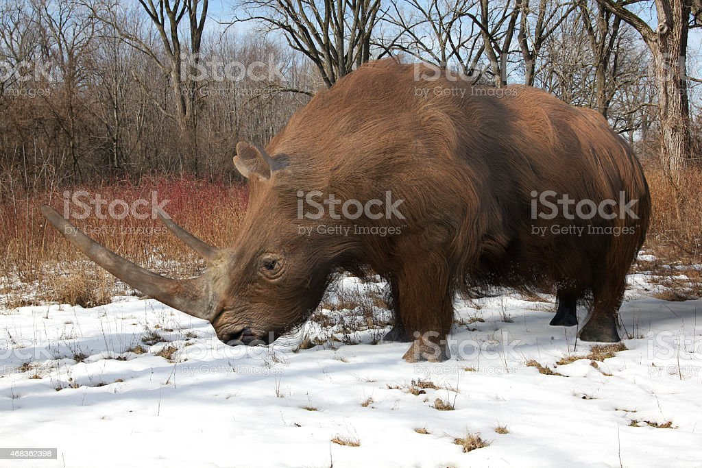 Woolly Rhinoceros In Ice Age Forest stock photo