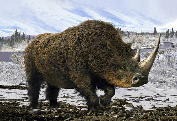 Woolly Rhinoceros Collage representative of the Pleistocene - woolly rhinoceros in the background of the winter tundra. rhinoceros stock pictures, royalty-free photos & images