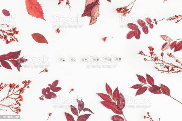 Word autumn flowers and leaves flat lay top view picture id831896016?b=1&k=6&m=831896016&s=612x612&h=shtm1a4 i gauv8vf4yrmekfeqixv nvyo6apw4xwwk=