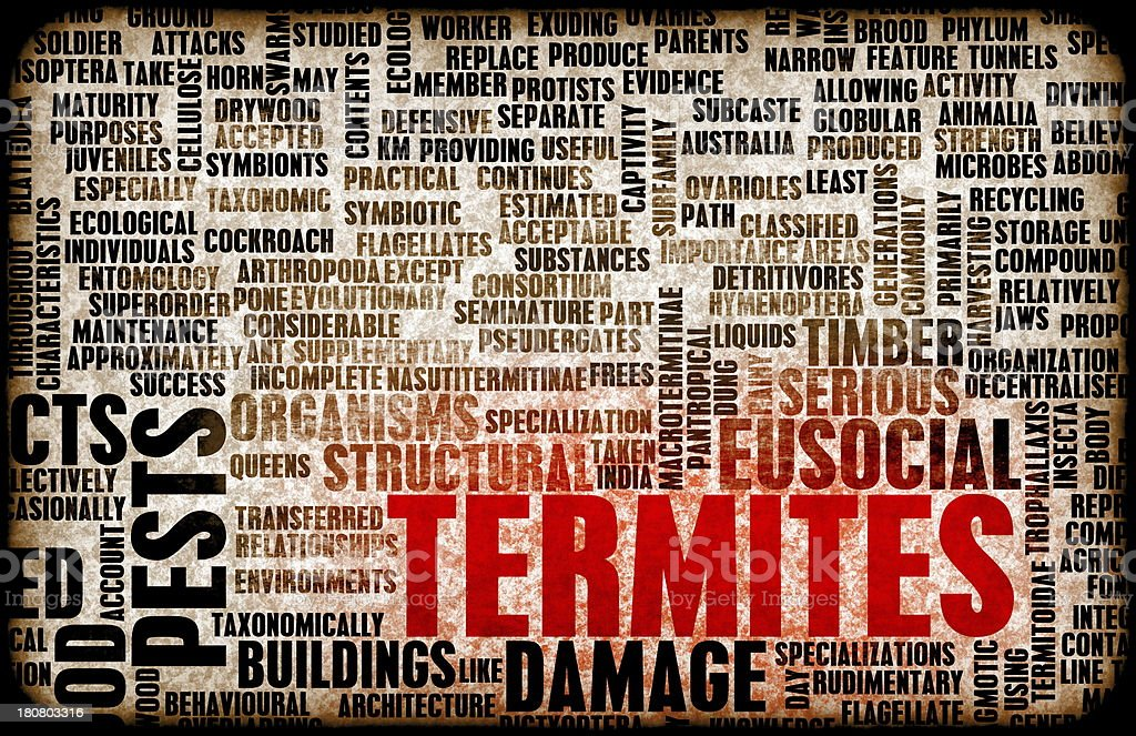 A word background of termites and words pertaining to them stock photo