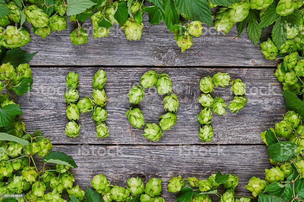 Word HOP made from hop cones stock photo