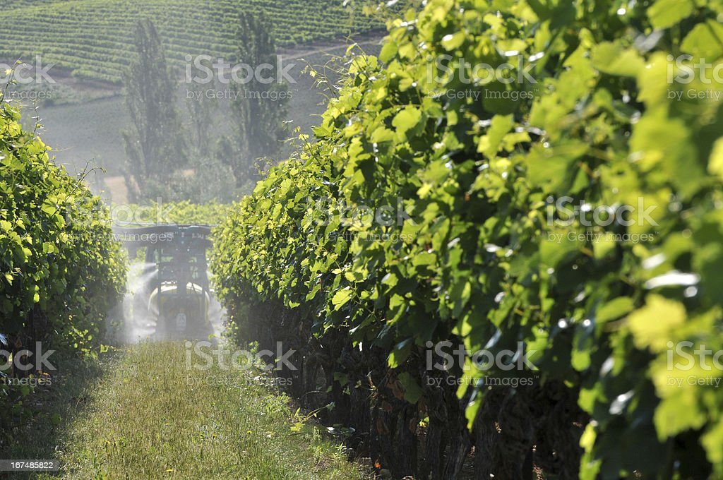 work and treatment of the grapevine royalty-free stock photo