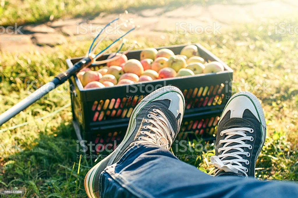 Work done - harvesting apples stock photo