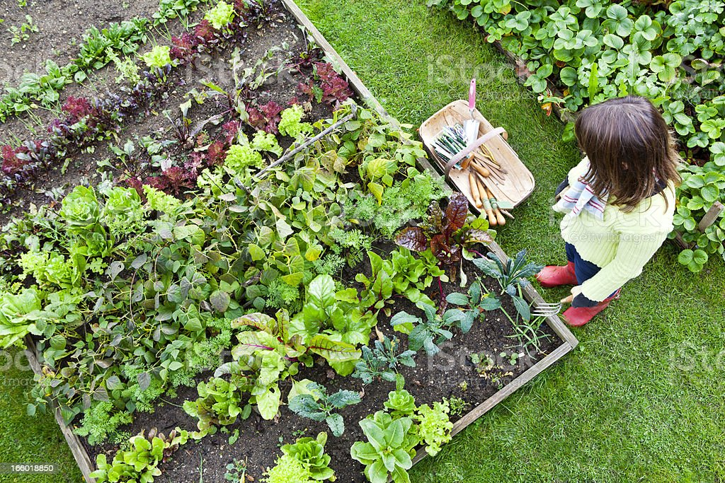 Work in a Vegetable Garden royalty-free stock photo