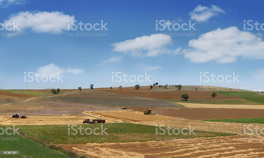 Work In Fields  Agricultural Field Stock Photo