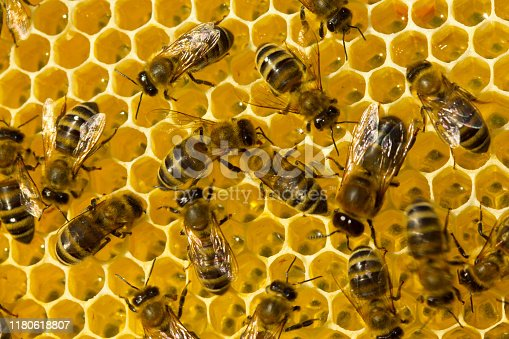 istock Work of young bees inside the hive 1180618807