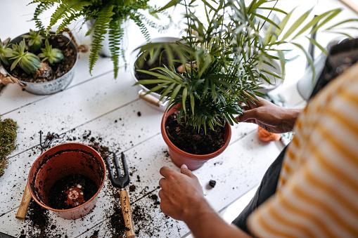 Young entrepreneur transplanting plants at flower shop, wearing apron, using gardening tools