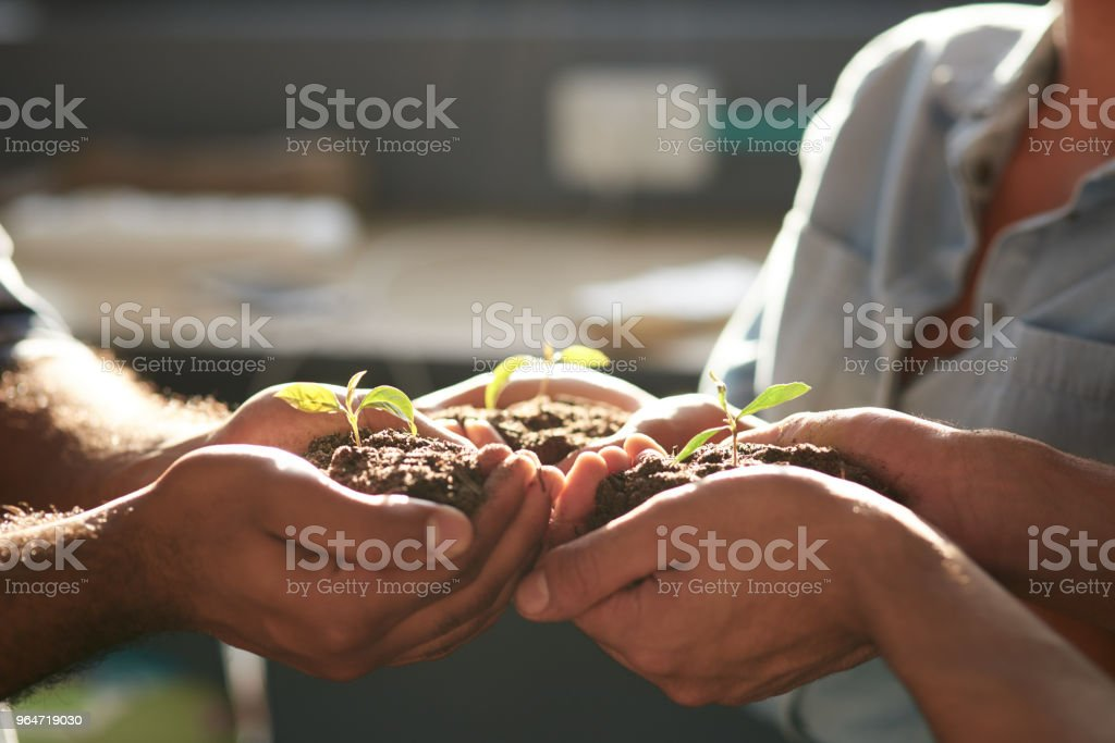 Work together, grow together royalty-free stock photo