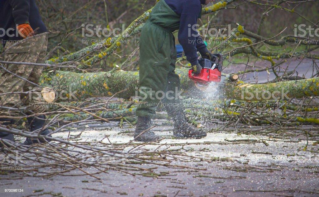 Travailleur coupe un arbre tombé sur la route - Photo