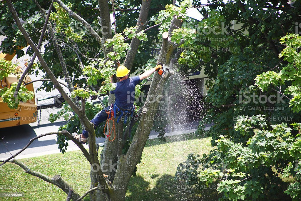 Worker cutting a tree branch with a chainsaw stock photo