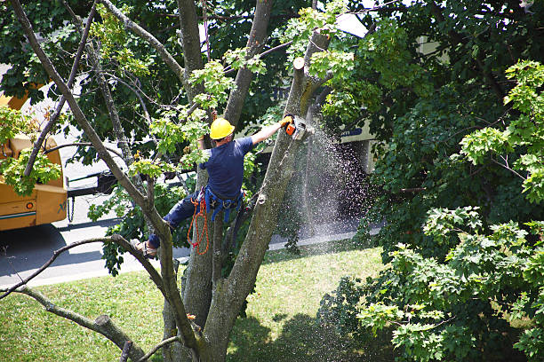 worker cutting a tree branch with a chainsaw - absence stock pictures, royalty-free photos & images