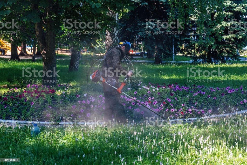 Worker cutting grass in garden near flowerbed with petunias by string grass trimmer zbiór zdjęć royalty-free