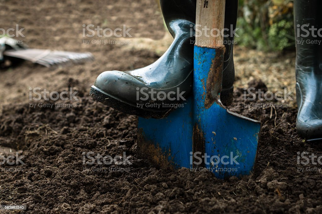 Worker digs the black soil with shovel  in the garden stock photo