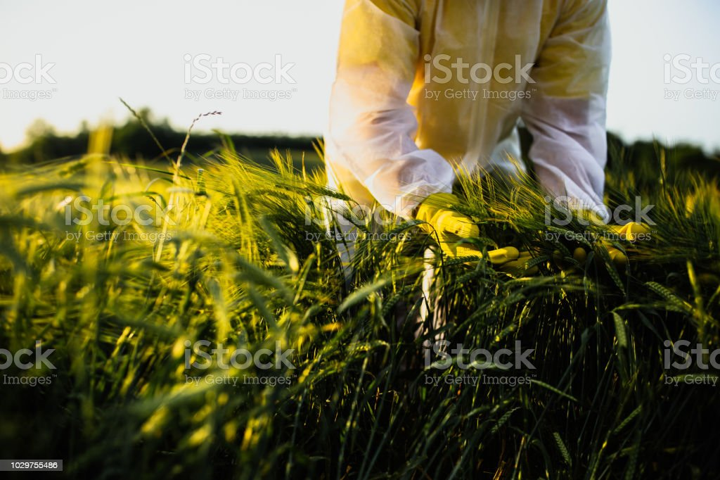 Worker for quality control in the field royalty-free stock photo