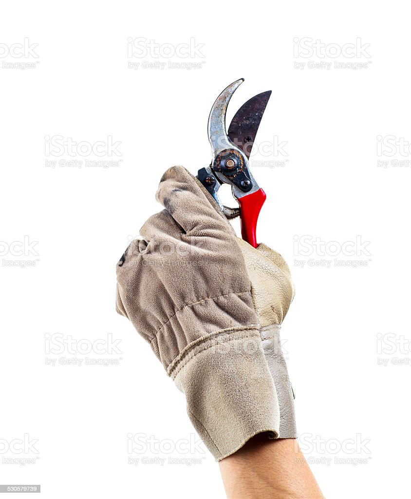 Worker holding old shear isolated on white stock photo