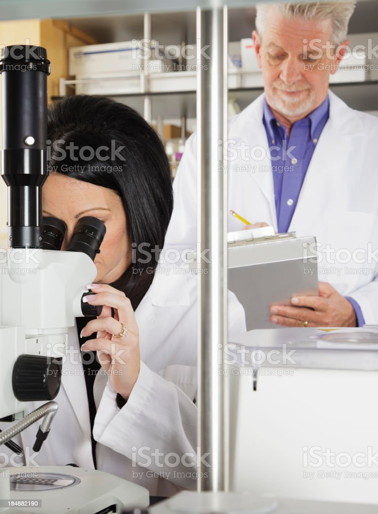 Worker in a Laboratory royalty-free stock photo