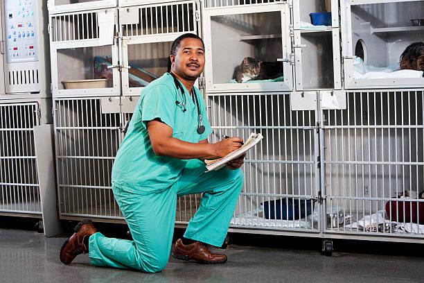 Worker in animal clinic picture id183416163?b=1&k=6&m=183416163&s=612x612&w=0&h=1tkryj958ntnle loy6eyrcbbgmej6pxr3g49ihzoyy=
