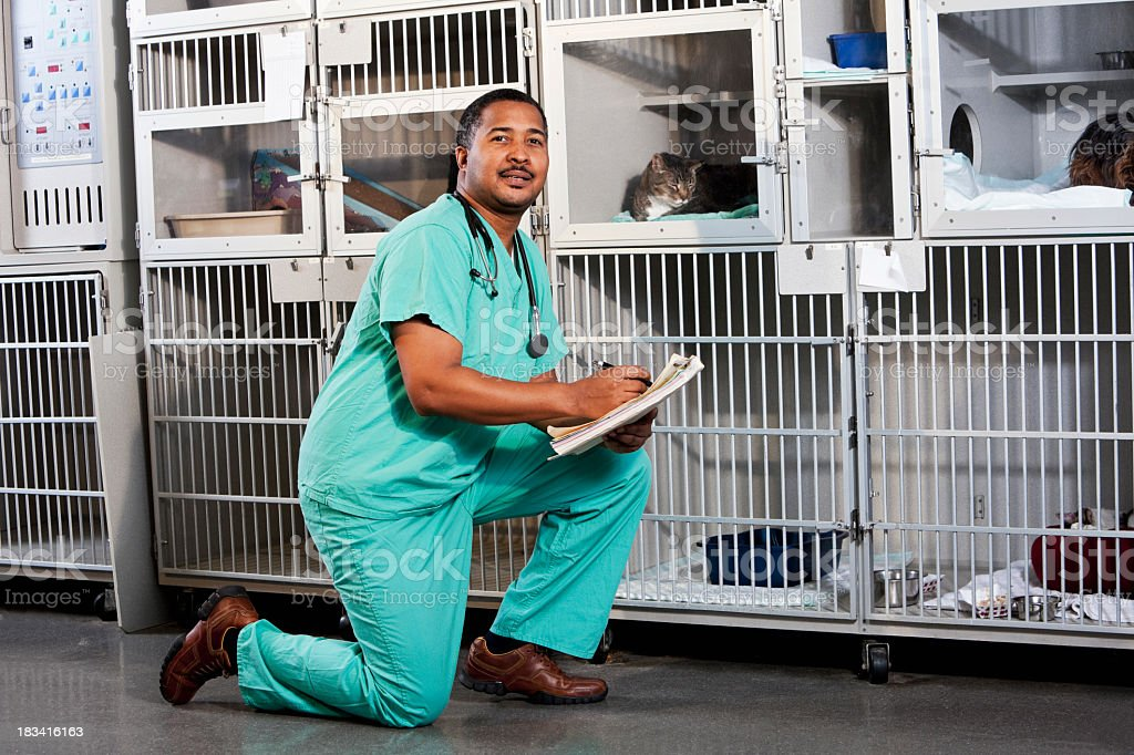 Worker in animal clinic stock photo