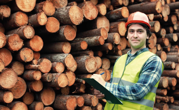 Worker in helmet counts wood lumber the working construction foreman in his place considering materials and work plan forester stock pictures, royalty-free photos & images