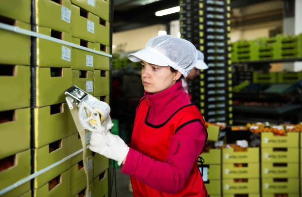 worker in uniform stickering barcodes on boxes of apricots brunette young female worker in uniform stickering barcodes on boxes of apricots at wholesale warehouse labeling stock pictures, royalty-free photos & images
