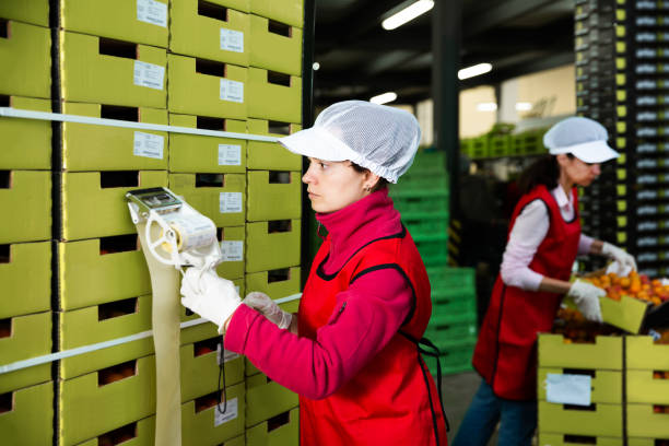 worker in uniform stickering barcodes on boxes of apricots stock photo
