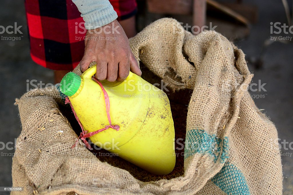 worker labor prepare paddy rice from hemp sack to produce stock photo
