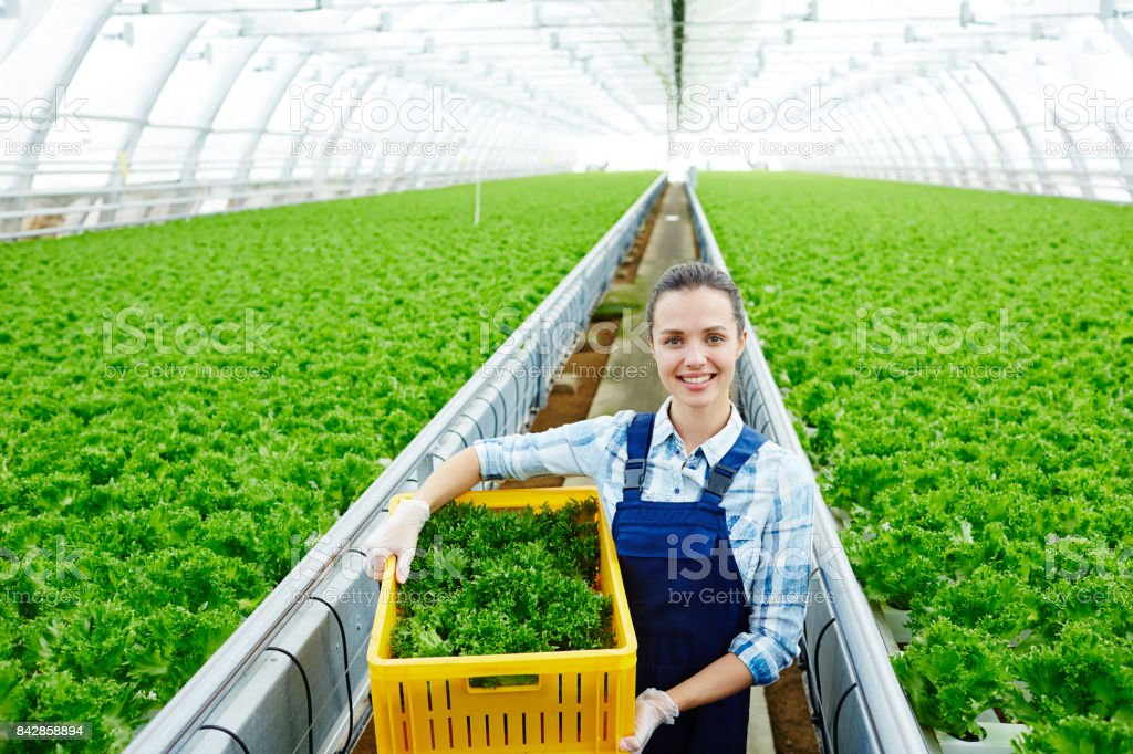 Worker of greenhouse stock photo