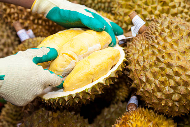 Worker opening Durian​​​ foto