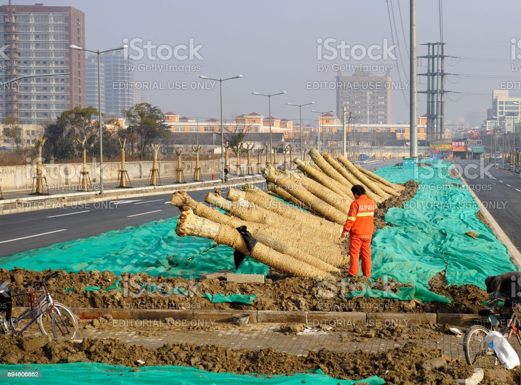Worker planting trees in the middle of the avenue during famous Ice & Snow World Festival stock photo