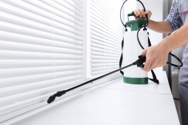 Worker Spraying Insecticide On Windowsill Midsection Of Worker Spraying Insecticide On Windowsill With Sprayer In Kitchen pest stock pictures, royalty-free photos & images