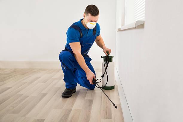 worker spraying pesticide at home - attrezzatura per la disinfestazione foto e immagini stock