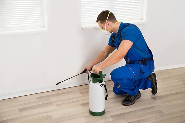 worker spraying pesticide on wall at home - attrezzatura per la disinfestazione foto e immagini stock