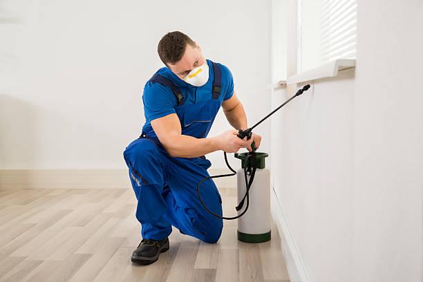operaio spraying pesticidi su finestra angolo - attrezzatura per la disinfestazione foto e immagini stock