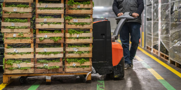 Worker transporting crates of lettuce in warehouse Low section of male worker transporting crates of lettuce with electric pallet truck in warehouse. pallet jack stock pictures, royalty-free photos & images