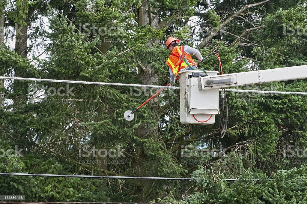 Worker trimming tree branches away from power lines royalty-free stock photo