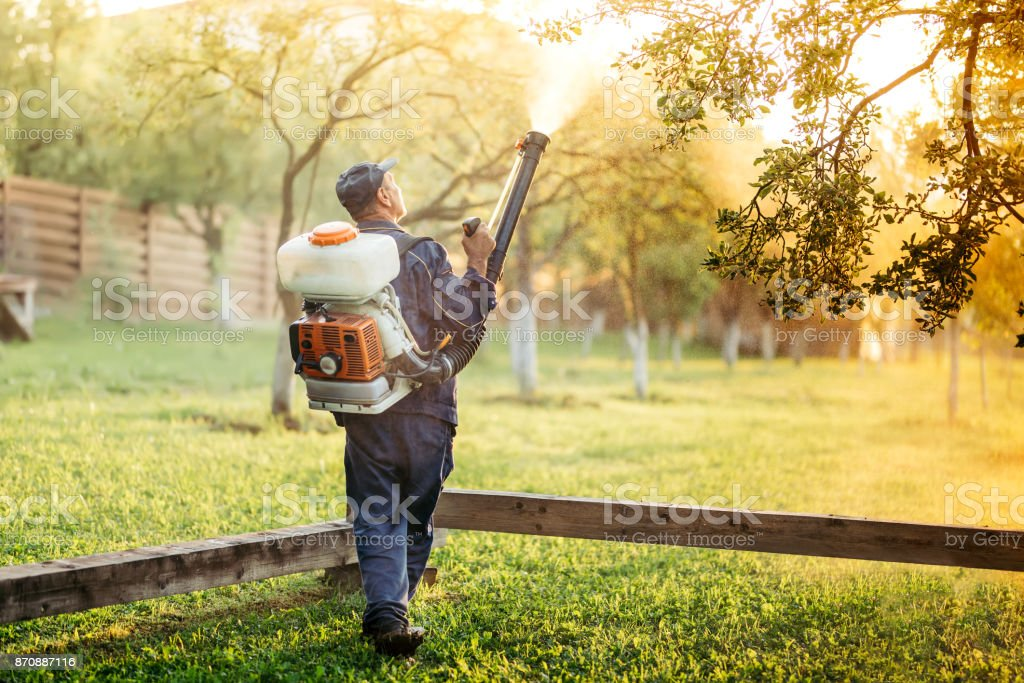 worker using sprayer for organic pesticide distribution in fruit orchard stock photo