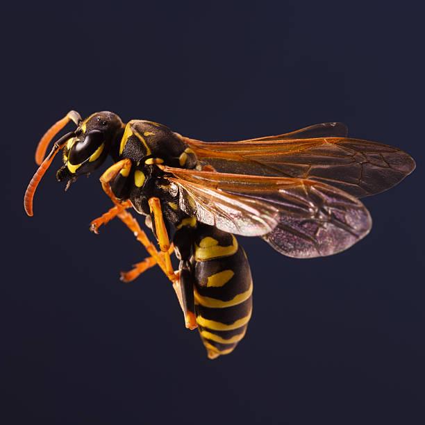trabalhador vespa - vespa comum - fotografias e filmes do acervo