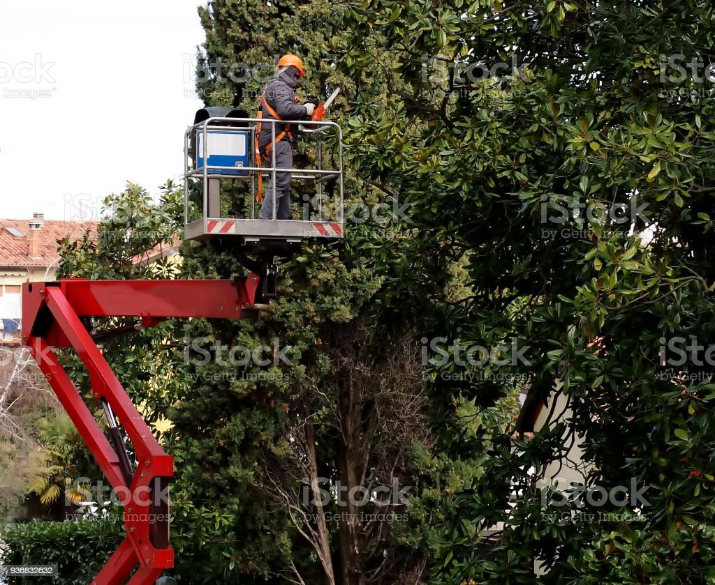 A worker with a chainsaw, from an aerial platform,  prunes the trees stock photo