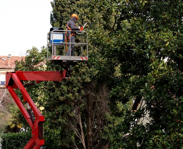 a worker with a chainsaw, from an aerial platform,  prunes the trees - tree surgeon stock photos and pictures