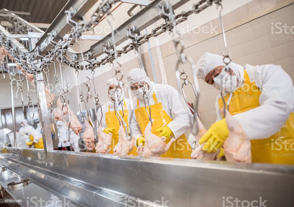 Workers at a food factory stock photo